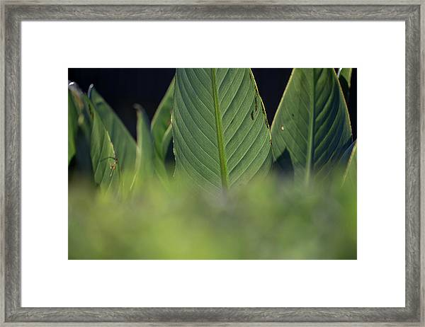 Large Dark Green Leaves Framed Print