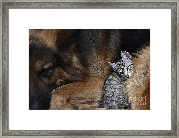 Large Dog And A Cat Framed Print