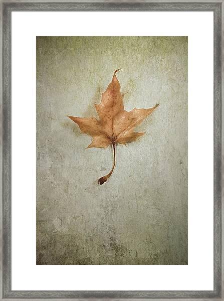 Last Days Framed Print
