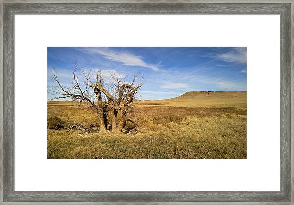 Last Stand Framed Print