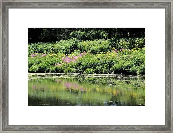 Lavender And Gold Reflections At Chicago Botanical Gardens Framed Print