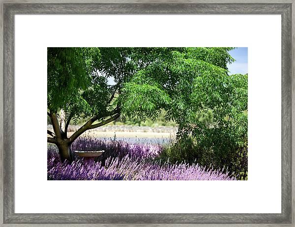 Lavender Gardeen Framed Print