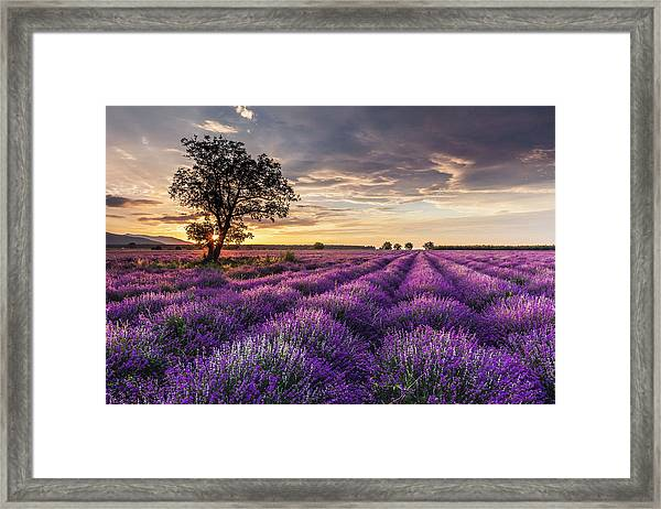 Lavender Sunrise Framed Print