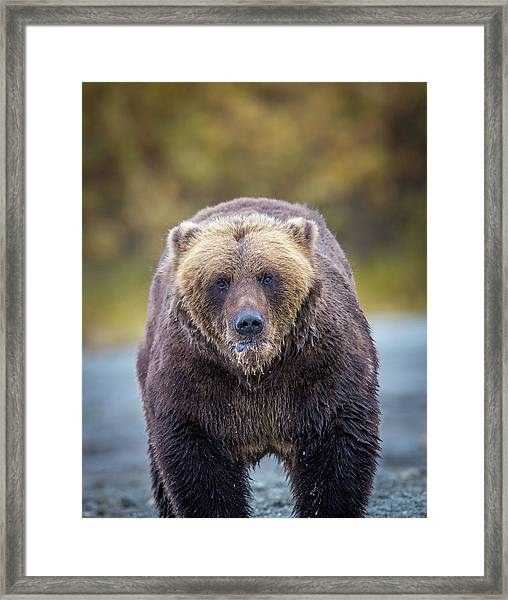 Lazy C Angry  Framed Print