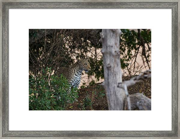 Framed Print featuring the photograph LC1 by Joshua Able's Wildlife