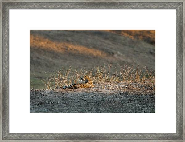 Framed Print featuring the photograph Lc10 by Joshua Able's Wildlife