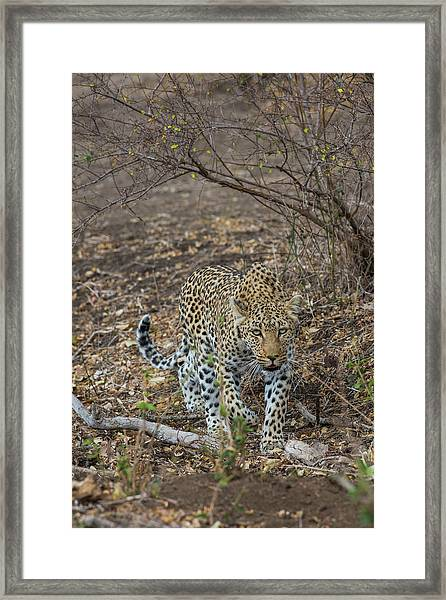 Framed Print featuring the photograph LC2 by Joshua Able's Wildlife