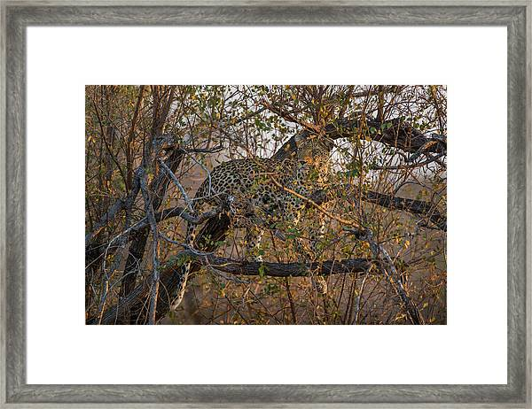 Framed Print featuring the photograph LC6 by Joshua Able's Wildlife