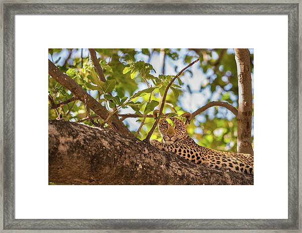 Framed Print featuring the photograph LC9 by Joshua Able's Wildlife