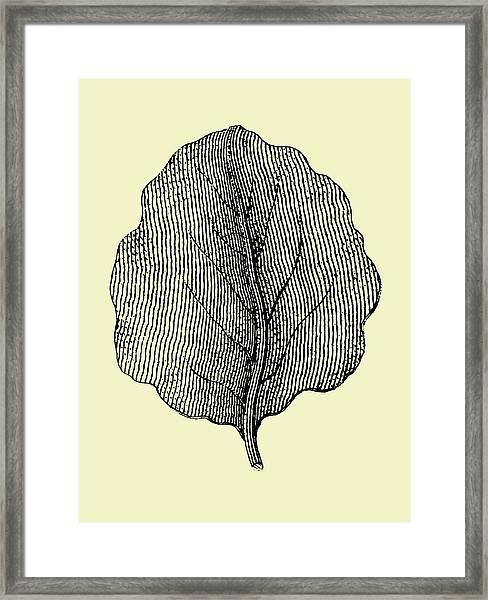 Leaf II Framed Print