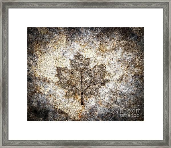 Leaf Imprint Framed Print