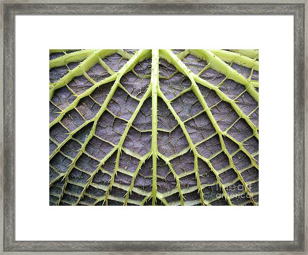 Leaf Underside With Stable Construction Framed Print