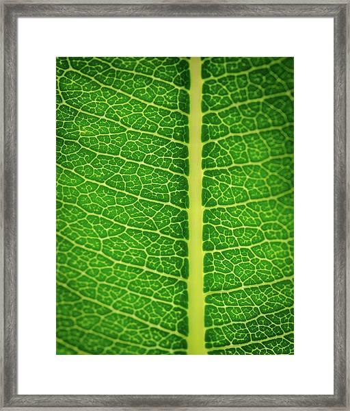 Leafy Detail Framed Print