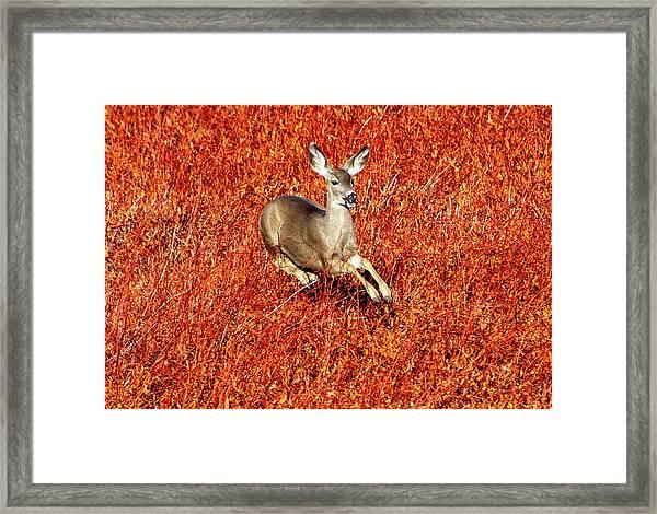 Leaping Deer Framed Print