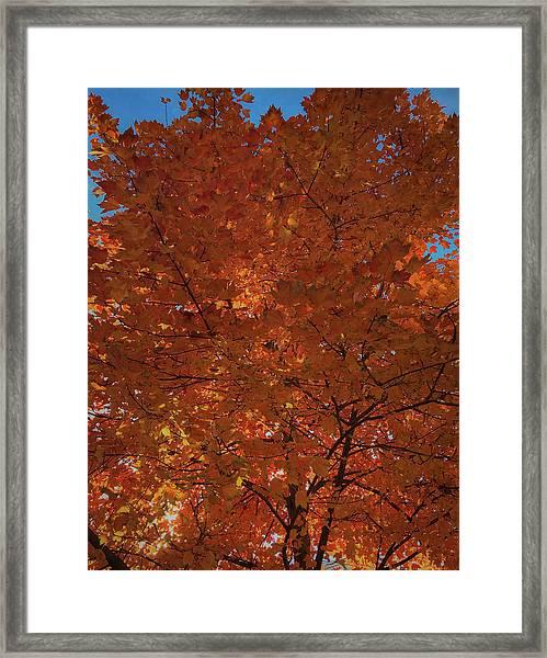Leaves Of Fire Framed Print