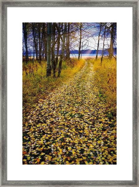 Leaves On Trail Framed Print