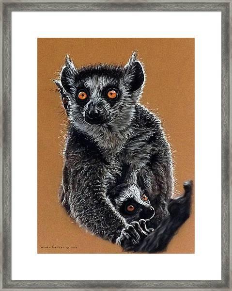 Lemurs Framed Print