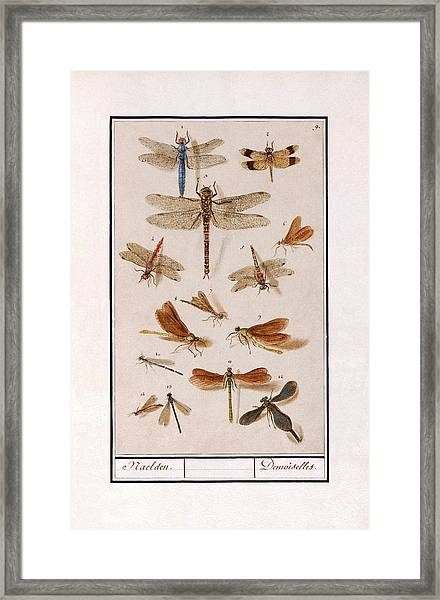 Libellen Framed Print