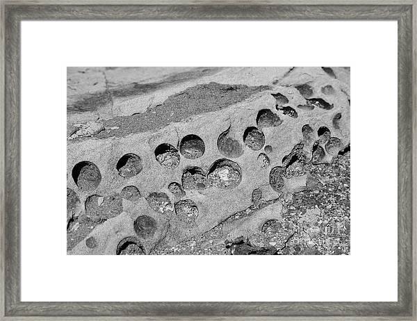Life Forms Framed Print