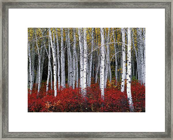 Light In Forest Framed Print