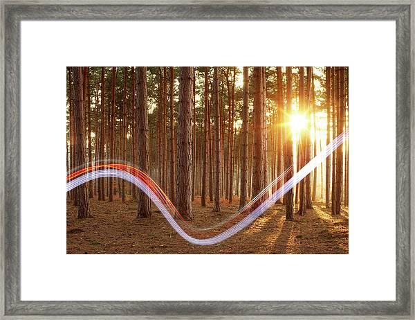 Light Swoosh In Woods Framed Print