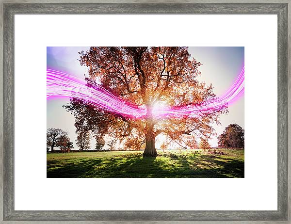 Light Trails Passing Around Tree Framed Print by Robert Decelis Ltd