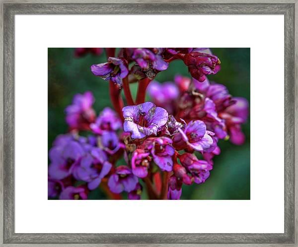 Lilac #h9 Framed Print