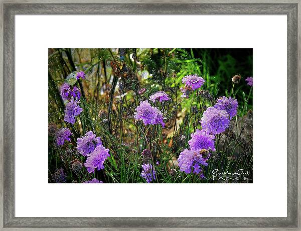 Lilac Jelly Pincushion Framed Print