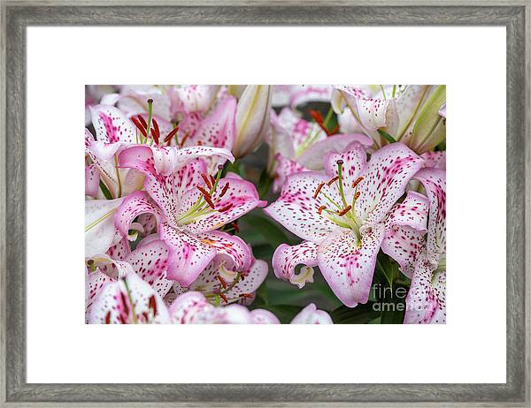 Lilium Solution Flowers Framed Print by Tim Gainey
