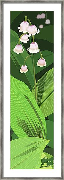 Lily Of The Valley Framed Print by Marian Federspiel