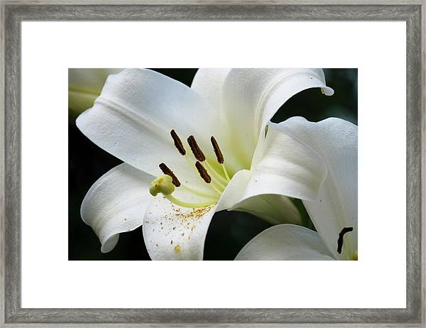 Lily_634_18 Framed Print