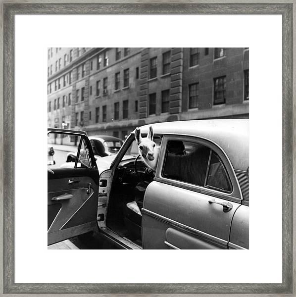 Linda Llama Framed Print by Ecell