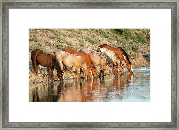 Lineup At The Pond-- Wild Horses Framed Print