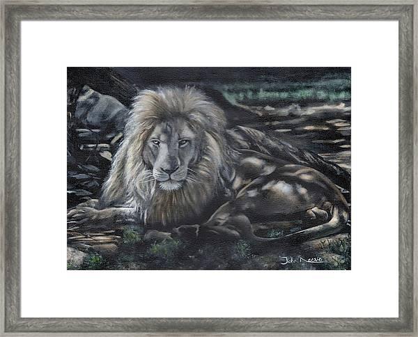 Lion In Dappled Shade Framed Print