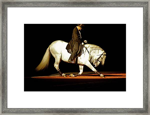 Framed Print featuring the photograph Lipizzan by Catherine Sobredo