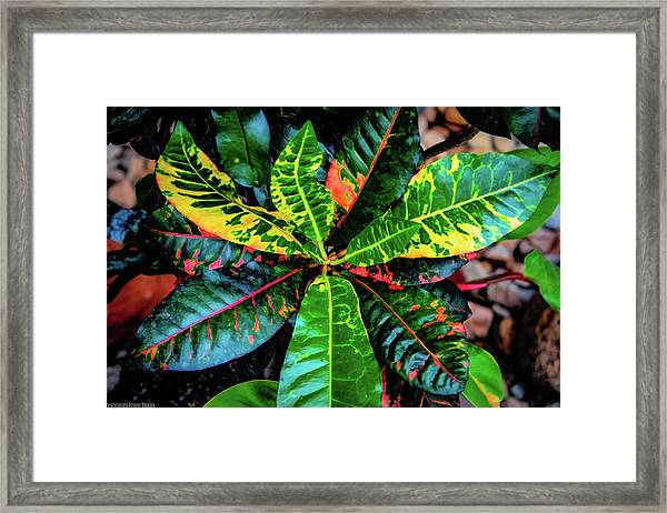 Liquid Tropical Colors Framed Print