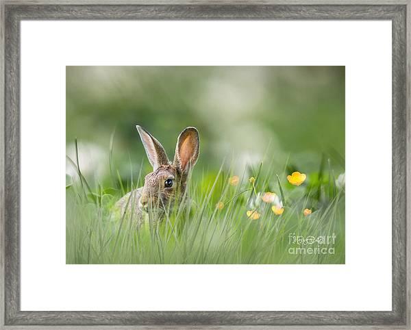 Little Hare Framed Print