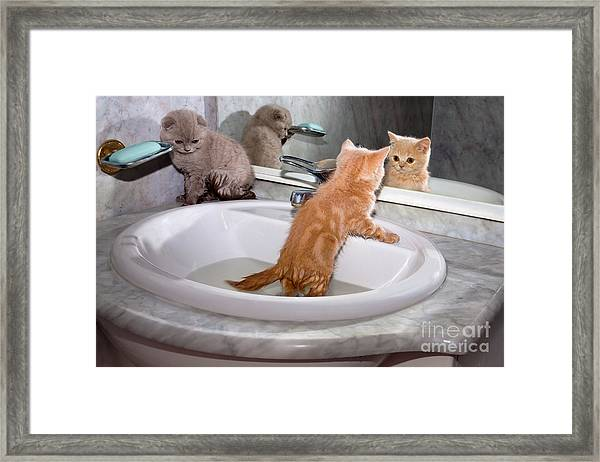 Little Kittens Bathing In The Sink Framed Print