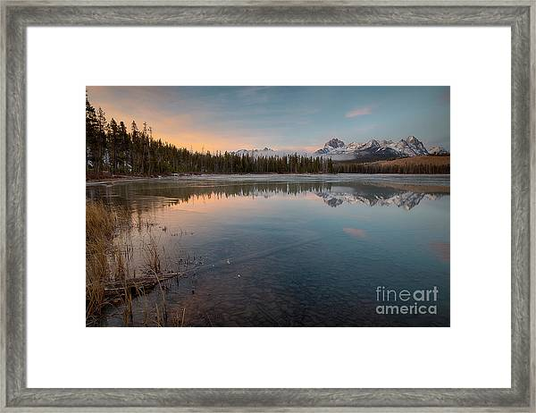 Little Refish Dawn Framed Print