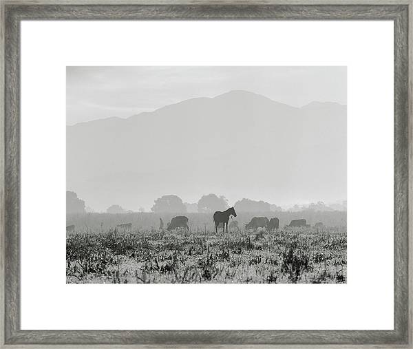 Livestock On Farm Land Near Jacmel Framed Print