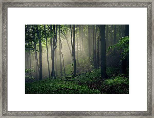 Living Forest Framed Print