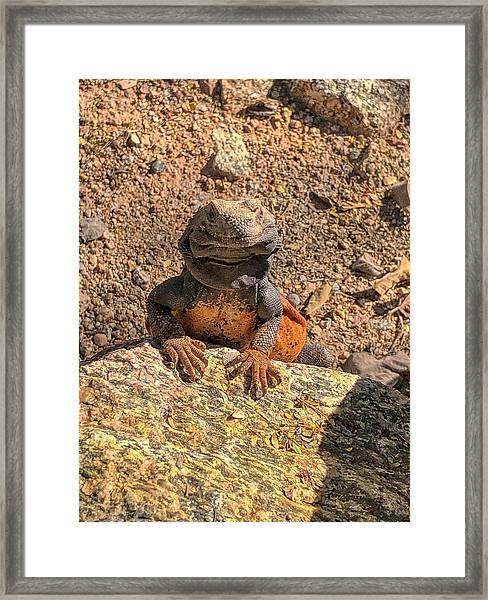 Lizard Portrait  Framed Print