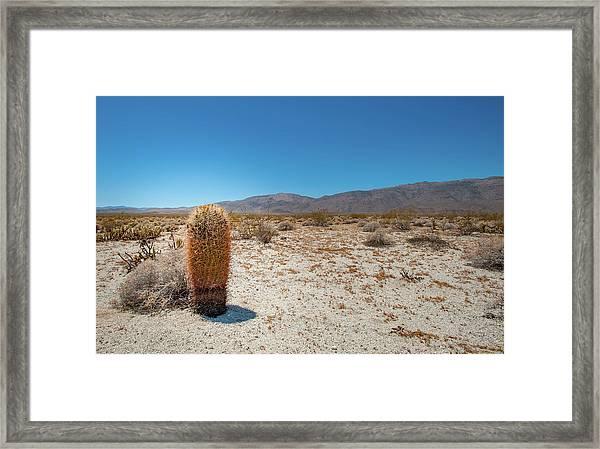 Lone Barrel Cactus Framed Print