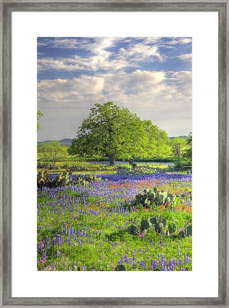 Lone Oak Standing In Field Of Framed Print by Danita Delimont