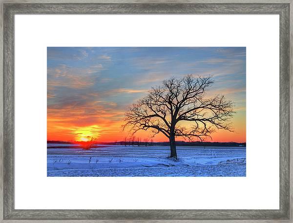 Lone Oak Tree In Winter Field During Framed Print