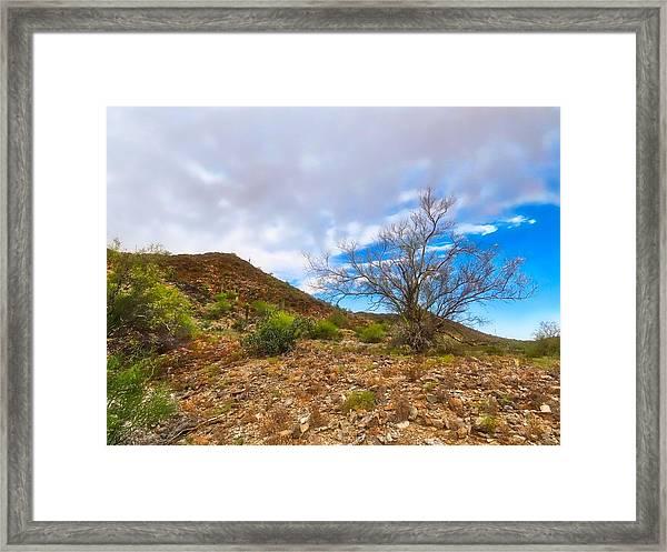 Lone Palo Verde Framed Print