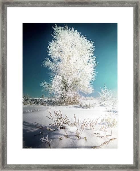 Lone Survivor / Grand Teton National Park  Framed Print