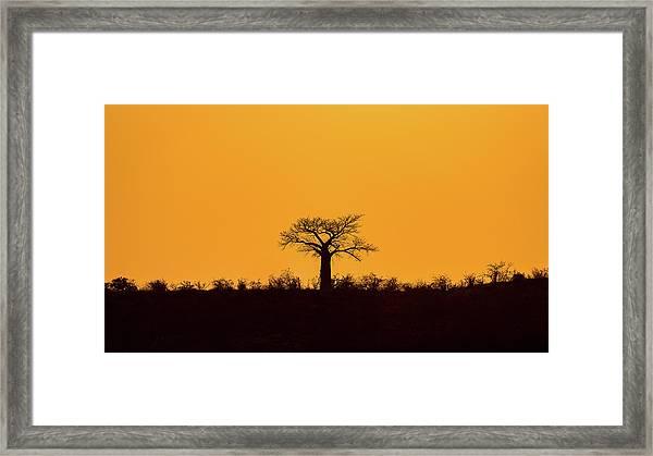 Lone Tree Hill Framed Print