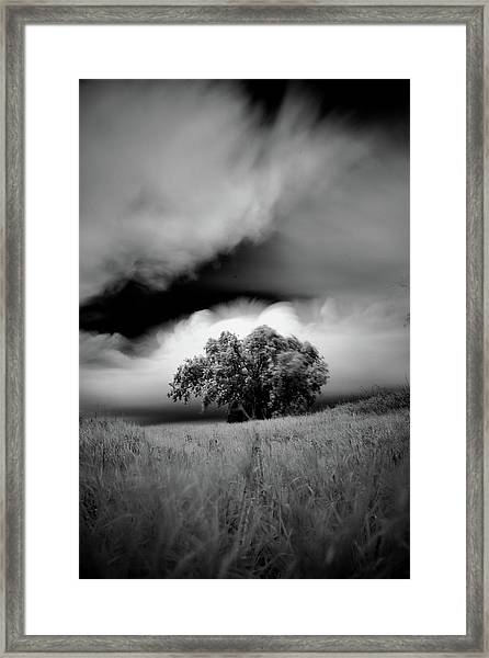 Lone Tree On A Hill Framed Print