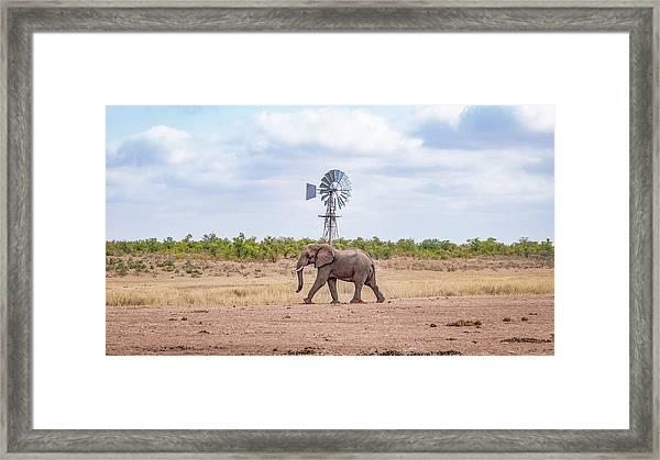 Lonely Bull Framed Print